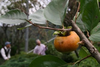 秋の収穫_d0140533_9514391.jpg