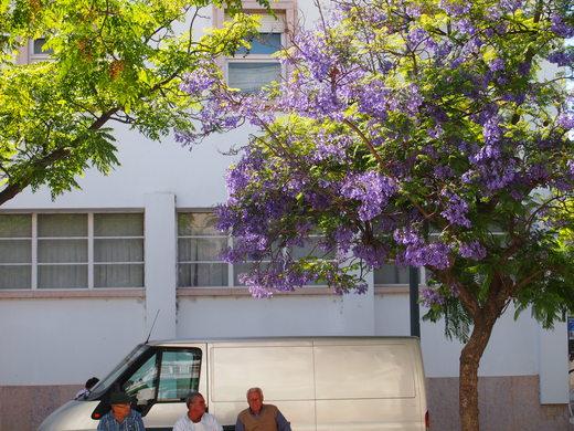 """南ポルトガルの漁師町で \""""仲良し\"""" を見つける_f0152733_22125478.jpg"""