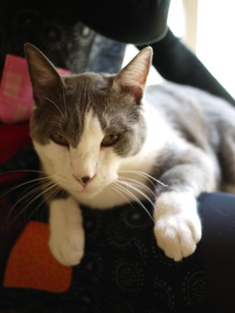 猫のお友だち たびおくんシソちゃん埼玉編。_a0143140_2135236.jpg