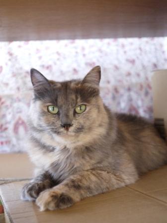 猫のお友だち たびおくんシソちゃん埼玉編。_a0143140_2142658.jpg