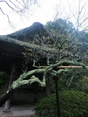 東慶寺「二人の花」展へ_b0132444_13173286.jpg