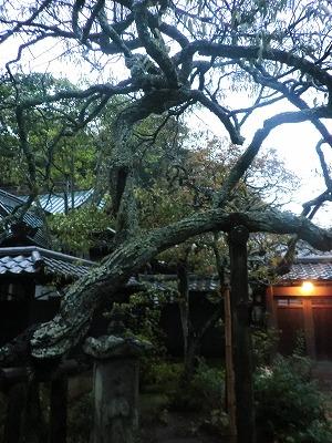 東慶寺「二人の花」展へ_b0132444_13173932.jpg