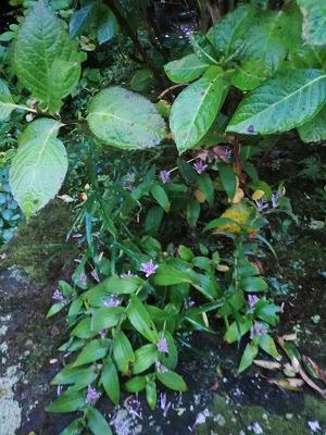 東慶寺「二人の花」展へ_b0132444_13175624.jpg
