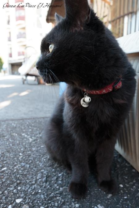 猫のいる風景 近所のクロちゃん 汚れる手_b0133053_0242036.jpg