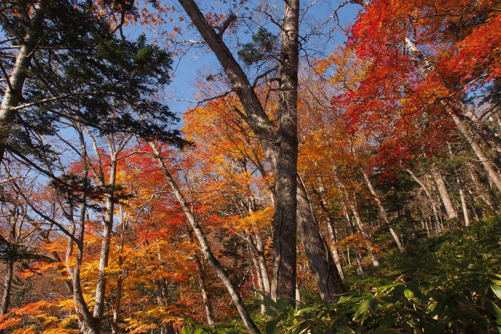 樽前山とイチャンコッペ山、10月23日-速報版-_f0138096_14224847.jpg