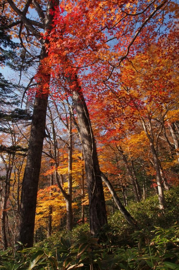 樽前山とイチャンコッペ山、10月23日-速報版-_f0138096_1423565.jpg