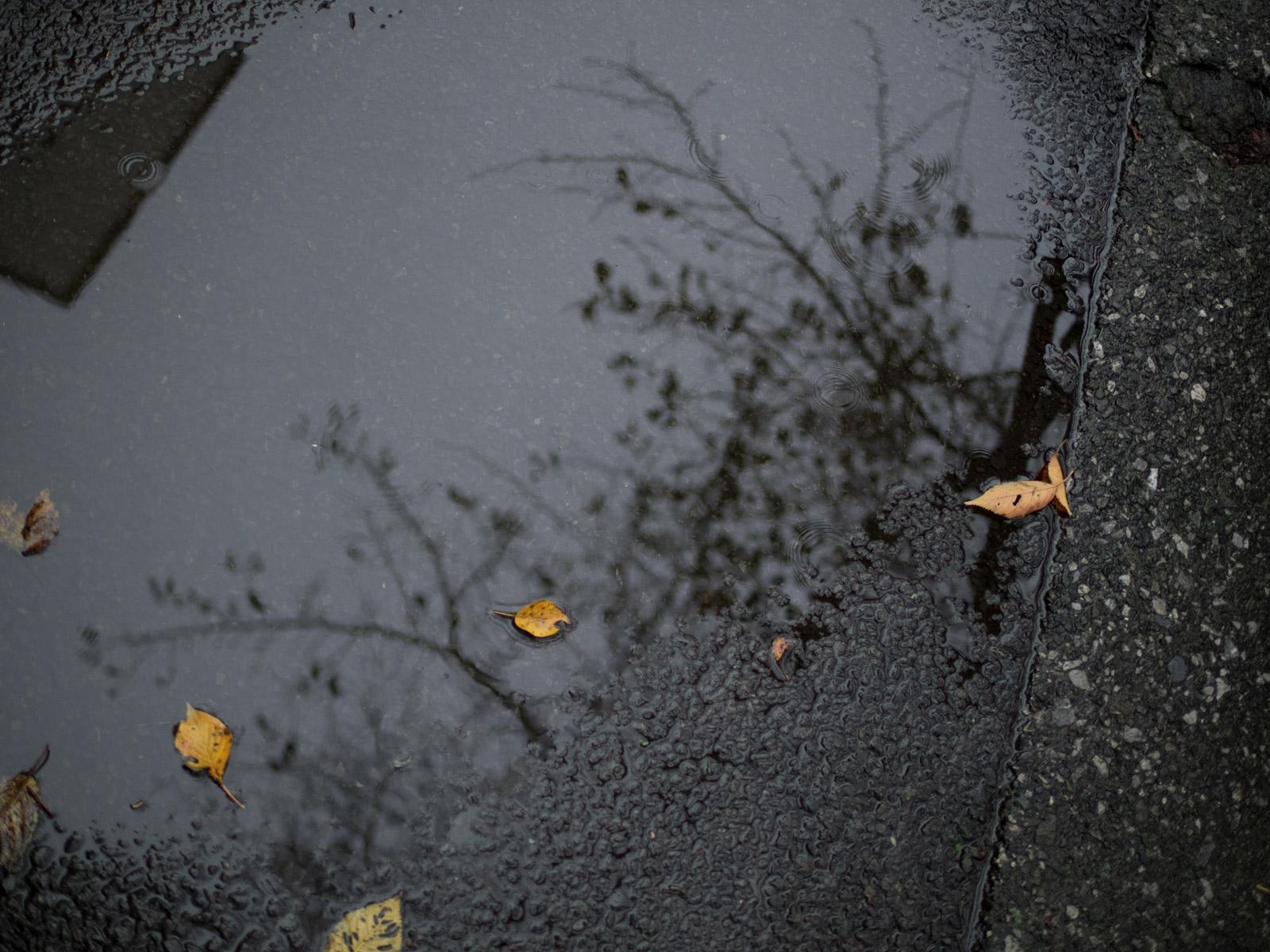 雨の水曜日とBAROLO_a0271402_941778.jpg