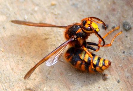 南魚沼市で蜂との戦い!_a0128408_18204173.jpg