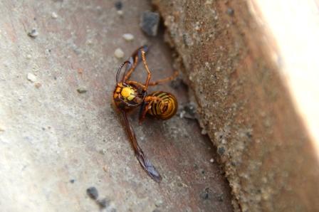 南魚沼市で蜂との戦い!_a0128408_1834127.jpg
