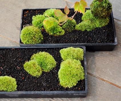 身近なものを使った苔盆栽ワークショップご案内_d0263815_16494527.jpg