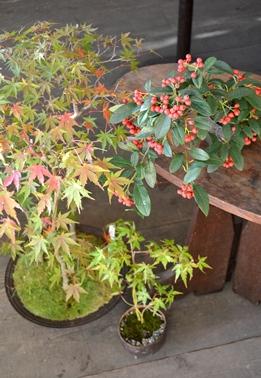 身近なものを使った苔盆栽ワークショップご案内_d0263815_1712821.jpg