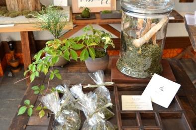 身近なものを使った苔盆栽ワークショップご案内_d0263815_1724971.jpg