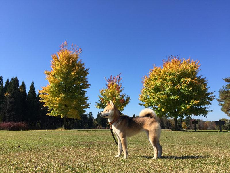 美しい秋、変化の秋_e0162117_18121191.jpg