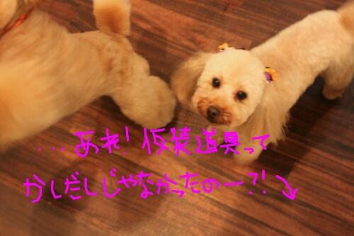 まるがり_b0130018_1094115.jpg