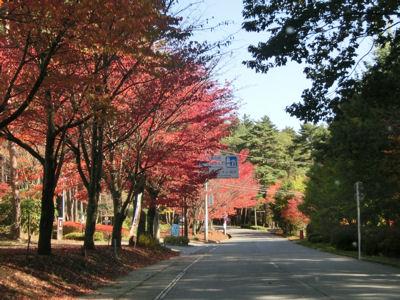 スパティオ通りの桜の紅葉_f0019247_2235347.jpg