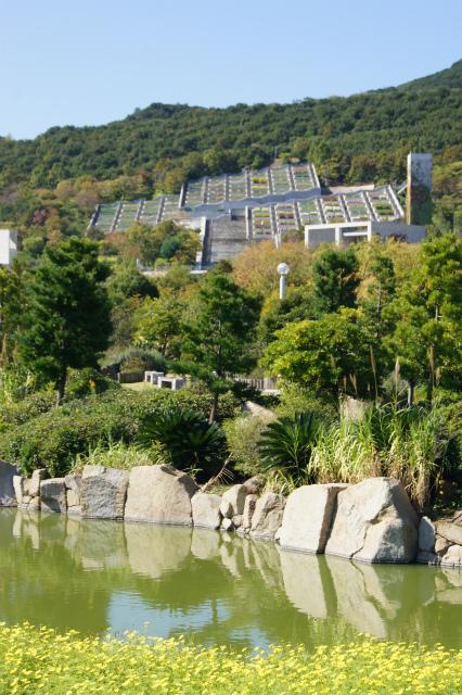 明石海峡公園~コスモス・ダリア_e0181373_21335496.jpg