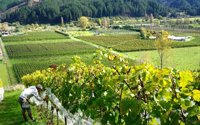 10月23日日本初リリースワイン!_b0016474_14232923.jpg