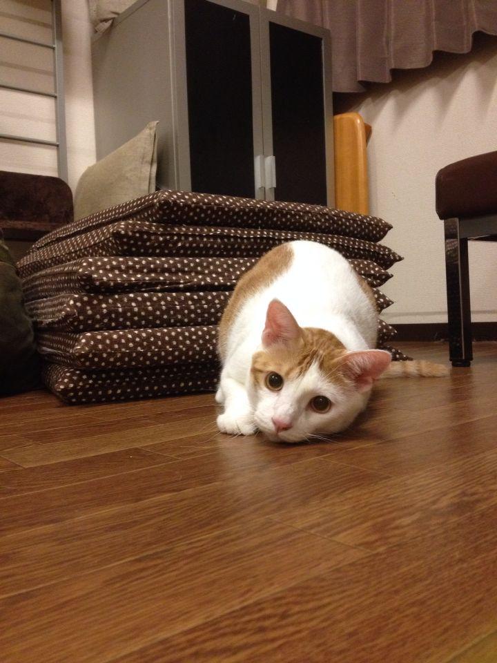 旅で出会った猫たち(きゃつら)_f0223097_18233352.jpg