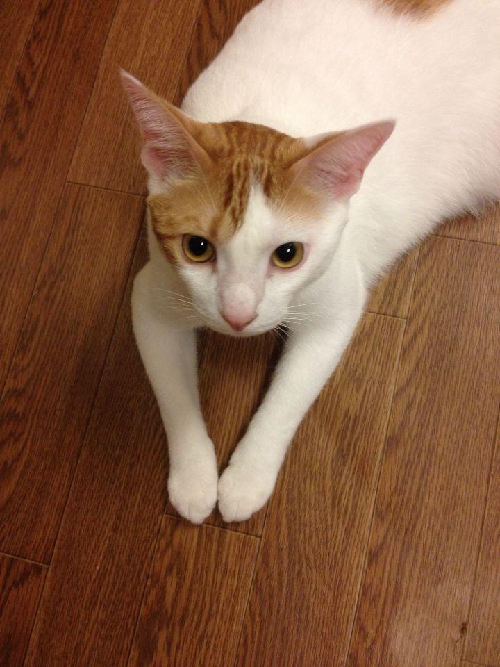旅で出会った猫たち(きゃつら)_f0223097_18233473.jpg