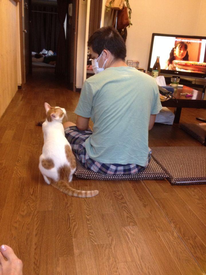 旅で出会った猫たち(きゃつら)_f0223097_1823385.jpg