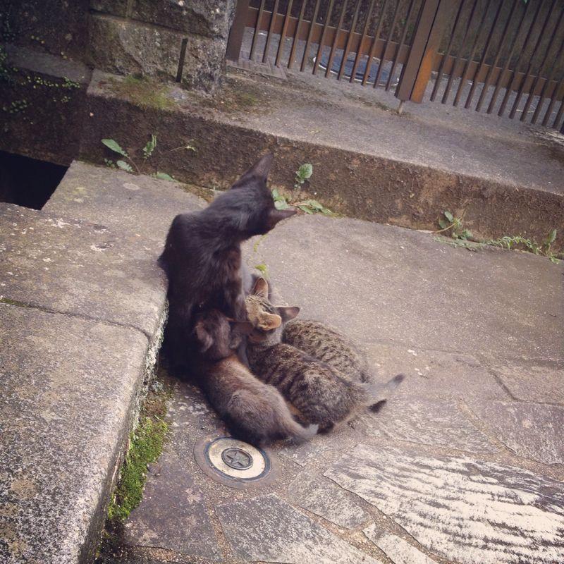 旅で出会った猫たち(きゃつら)_f0223097_18241431.jpg