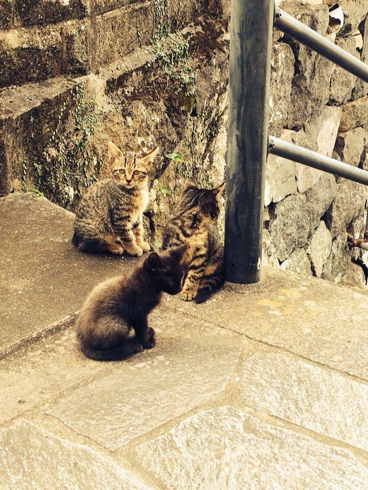 旅で出会った猫たち(きゃつら)_f0223097_1824208.jpg