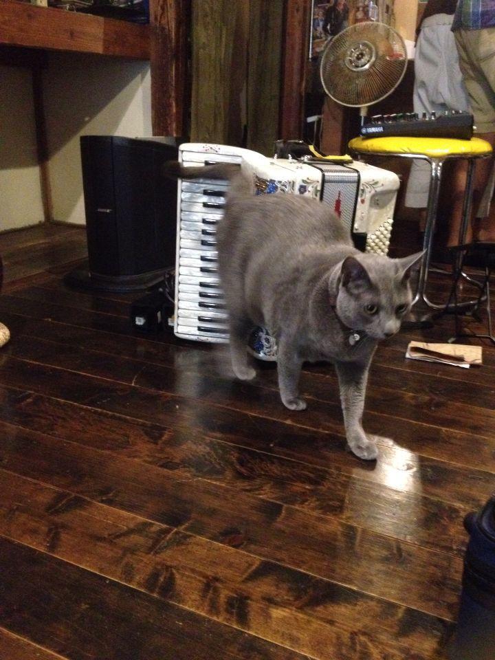 旅で出会った猫たち(きゃつら)_f0223097_1824224.jpg