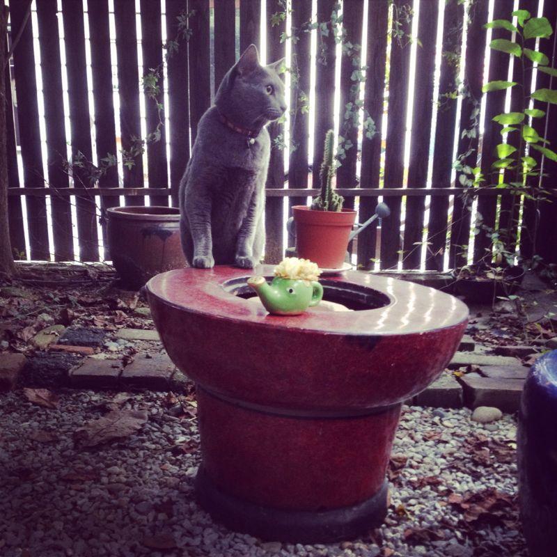 旅で出会った猫たち(きゃつら)_f0223097_18243143.jpg