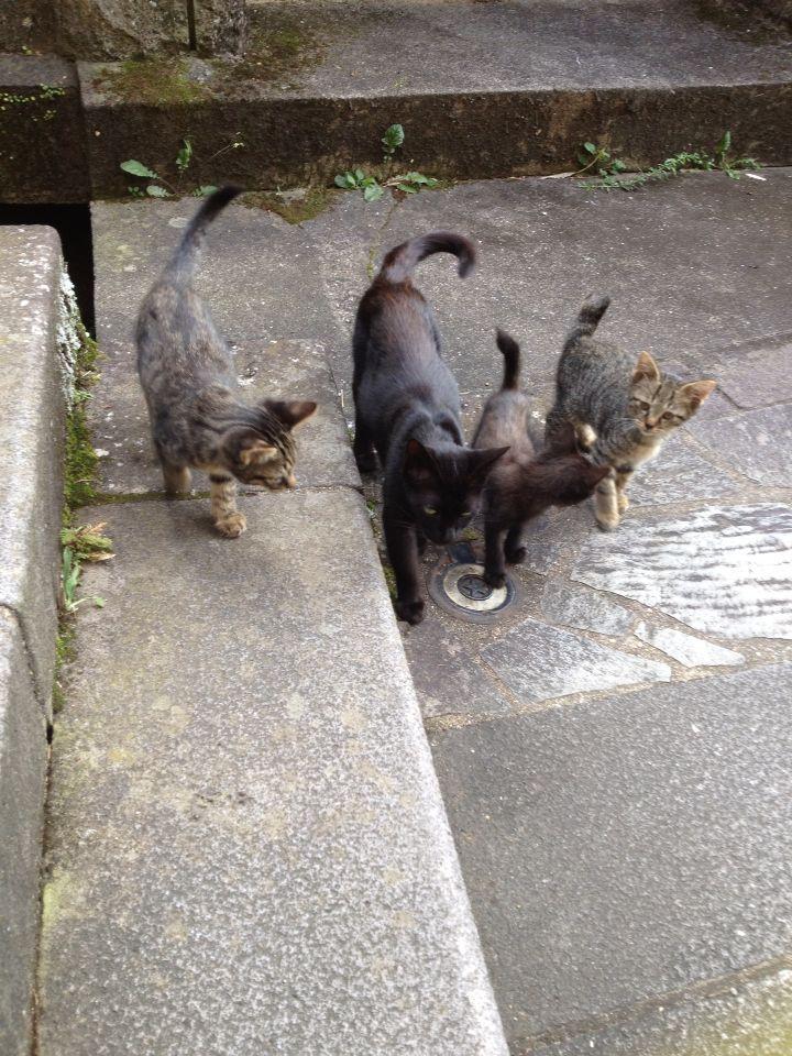 旅で出会った猫たち(きゃつら)_f0223097_1824337.jpg