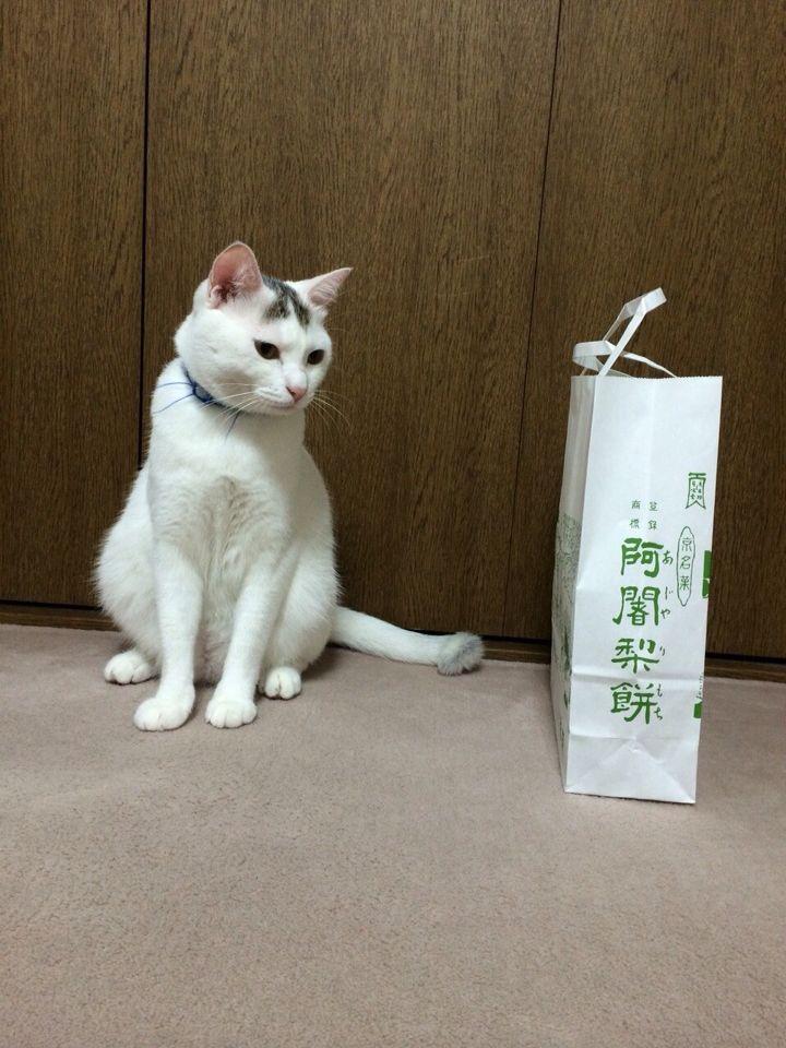 旅で出会った猫たち(きゃつら)_f0223097_18243935.jpg