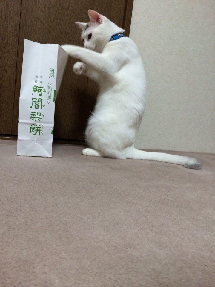 旅で出会った猫たち(きゃつら)_f0223097_18244136.jpg