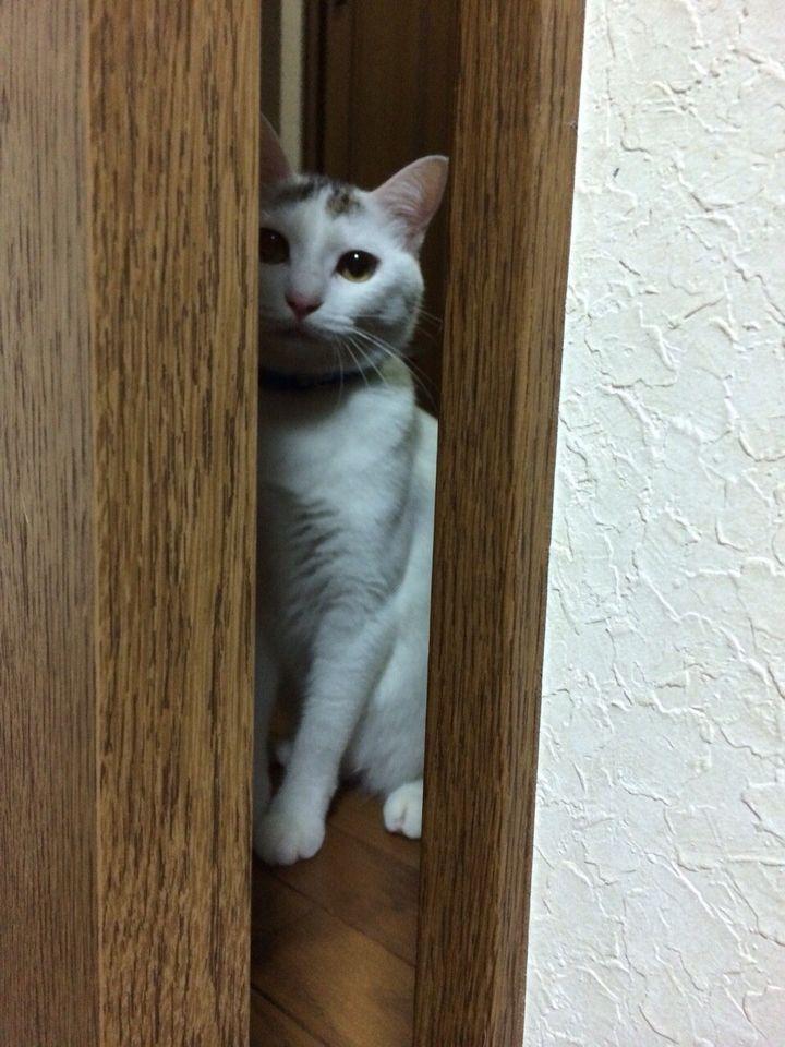 旅で出会った猫たち(きゃつら)_f0223097_18244454.jpg