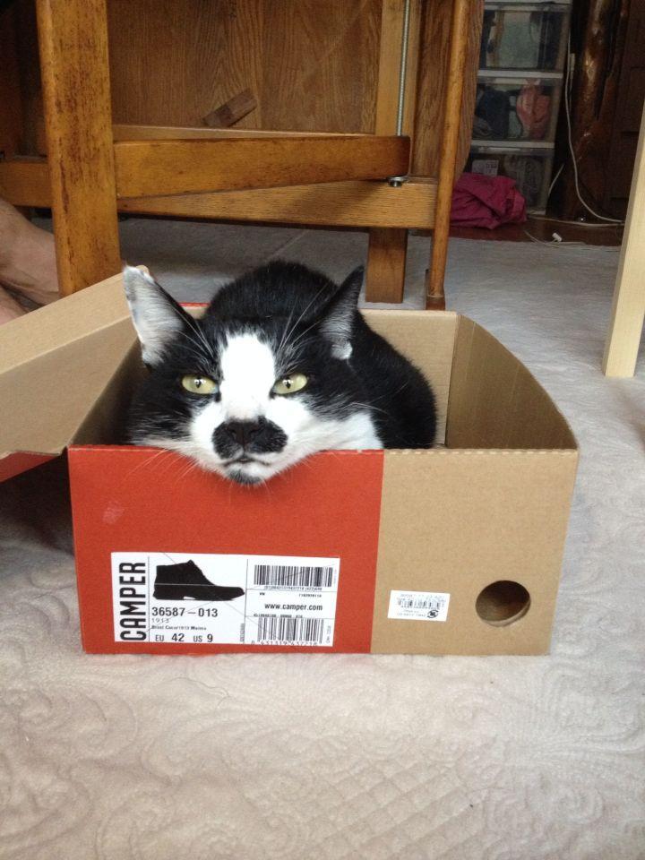旅で出会った猫たち(きゃつら)_f0223097_18244663.jpg