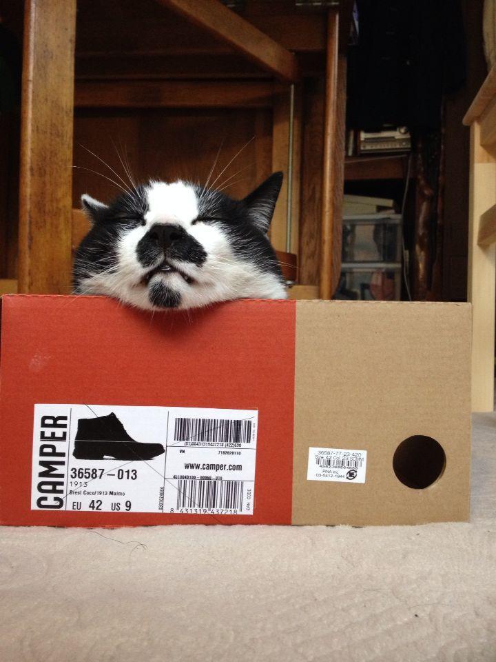 旅で出会った猫たち(きゃつら)_f0223097_18244830.jpg