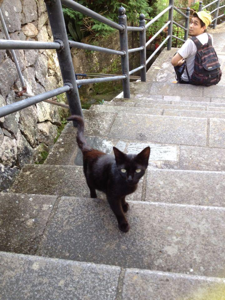 旅で出会った猫たち(きゃつら)_f0223097_1824575.jpg