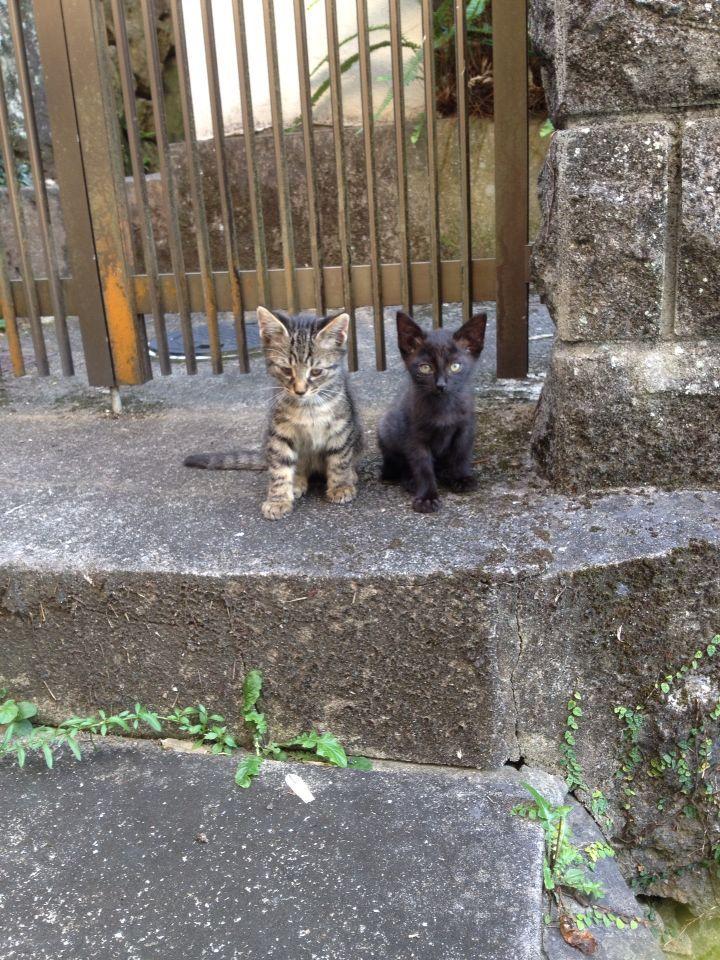 旅で出会った猫たち(きゃつら)_f0223097_1824810.jpg