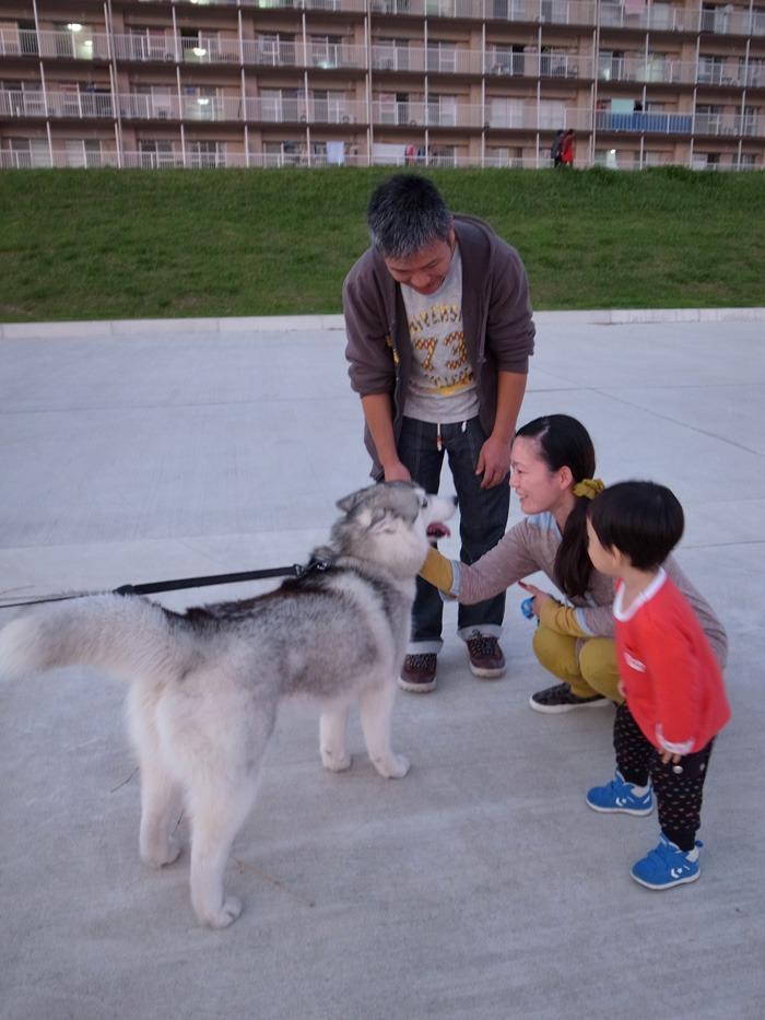 のどかなおんぶ犬の一日 (≧∇≦)_c0049299_22121929.jpg