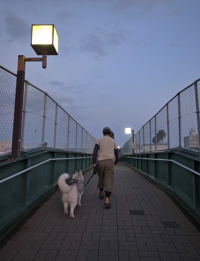 のどかなおんぶ犬の一日 (≧∇≦)_c0049299_22144640.jpg
