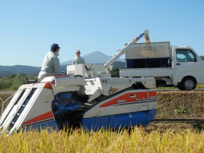 秋の収穫_b0084826_7371753.jpg