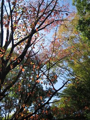 つくば物語2014「JAZZと遺跡が出会う秋」_b0100229_1375146.jpg