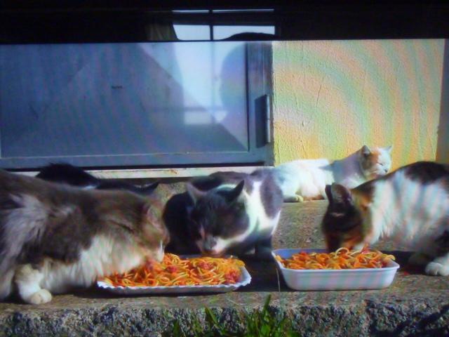 ネコにスパゲッティーか_b0217741_00450874.jpg