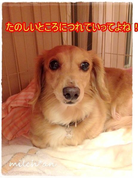 b0115642_21535853.jpg