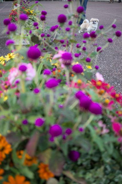 秋の港の見える丘公園_a0257652_1454565.jpg