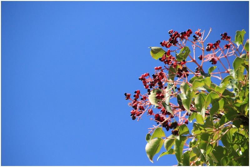 秋の山散歩♪_a0167759_22272596.jpg