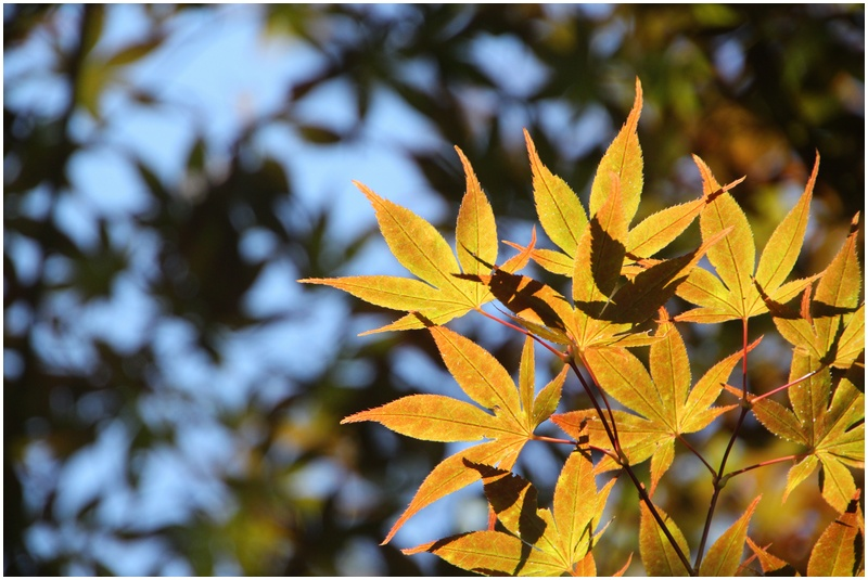 秋の山散歩♪_a0167759_22281284.jpg