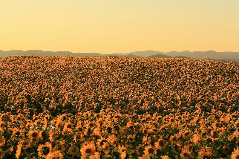 何時もの畑の風景より~_a0039860_17145842.jpg