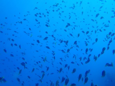 水納島でダイビング!!_a0156273_17125073.jpg