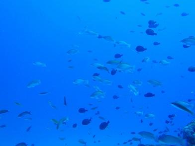 水納島でダイビング!!_a0156273_17140222.jpg