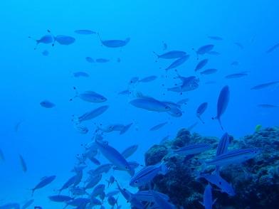 水納島でダイビング!!_a0156273_17144351.jpg