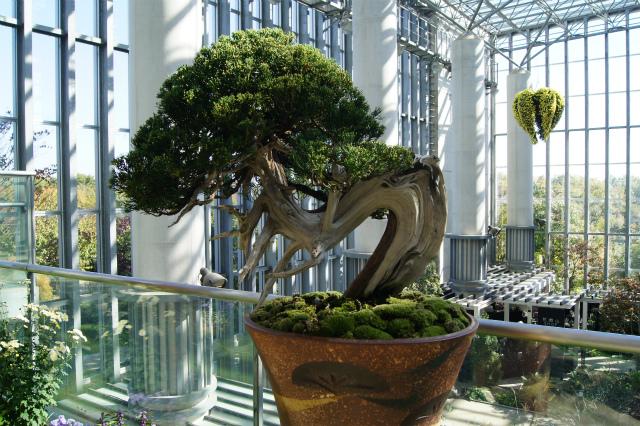 奇跡の星の植物館~グリーンアート_e0181373_2052443.jpg
